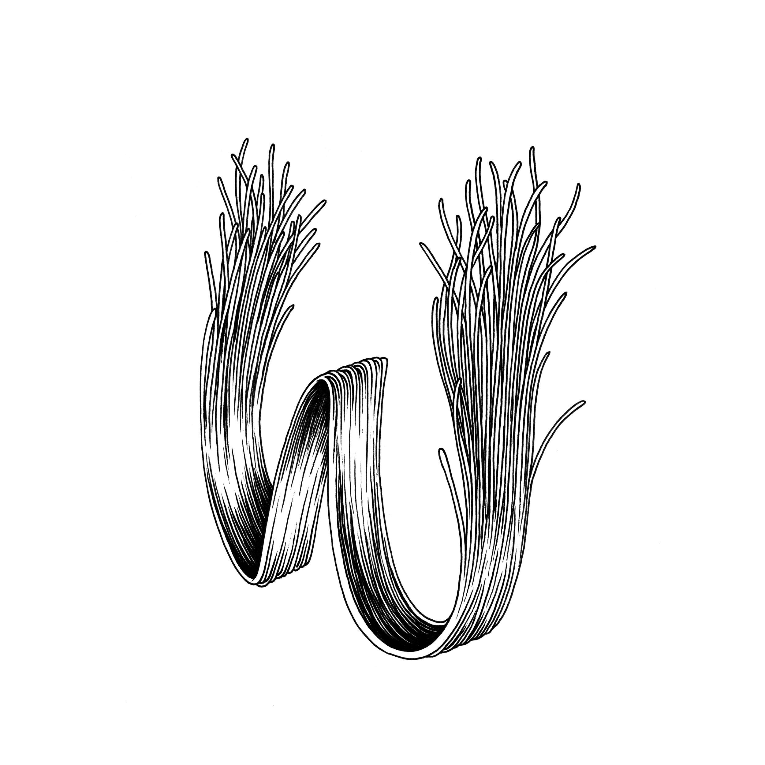 W_01_web.jpg