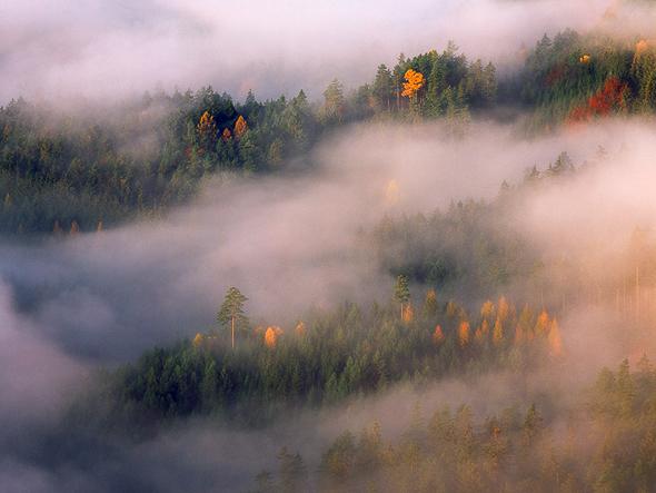 Name: Trees & Mists, Camera: Hasselblad H1, Lens: 210mm, Film: Fuji Velvia 50, Aperture: f/11, Exposure: 1/4s, Filters: Singh-Ray Warming Polariser