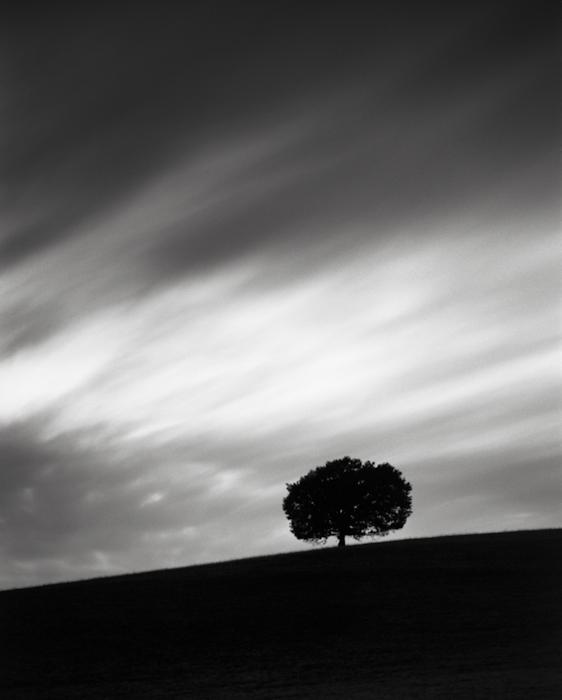 Title: Tree, Camera: Ebony RSW 45, Lens: Schneider Xenar 150 mm, Filtr: Lee Big Stopper, Film: Kodak T-Max 100, Exposure: 900″ , f 8