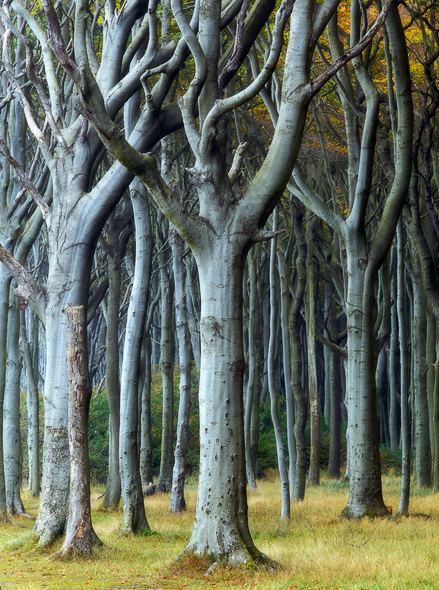 Caption: Curly Trees, Camera: Hasselblad H1, Lens: 210mm, Digital Back: Phase One IQ140, ISO: 50, Exposure: 0.3s, Aperture: f/16