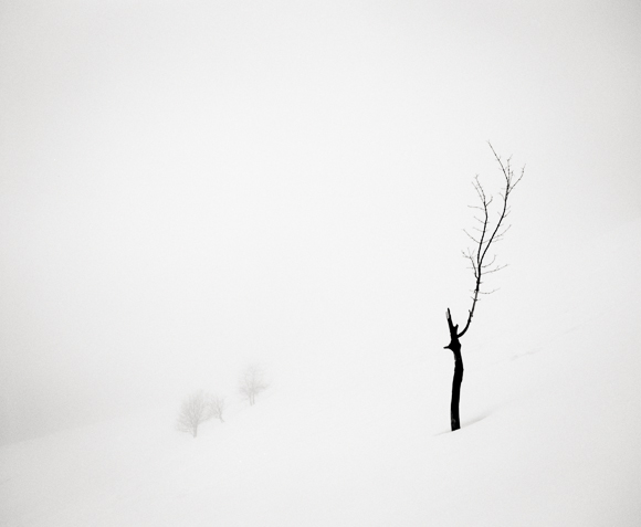 Title: Broken Tree, Camera: Mamiya RB Pro S, Lens: Mamiya Sekor 50 mm, Film: Kodak T-Max 400, Exposure: 45″ , f 11, La Clusaz, France, 2013