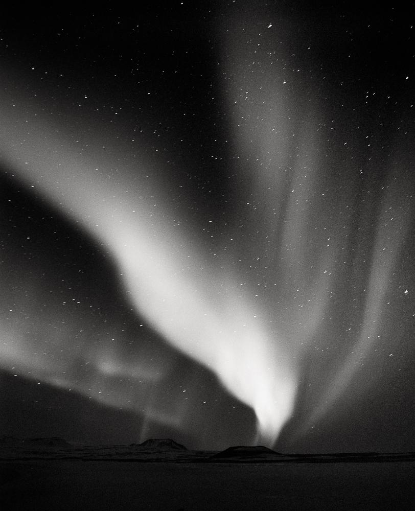 Eagle, Iceland, 2013
