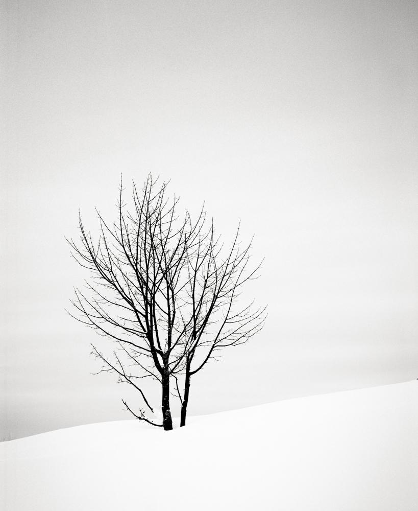Tree, France, 2013