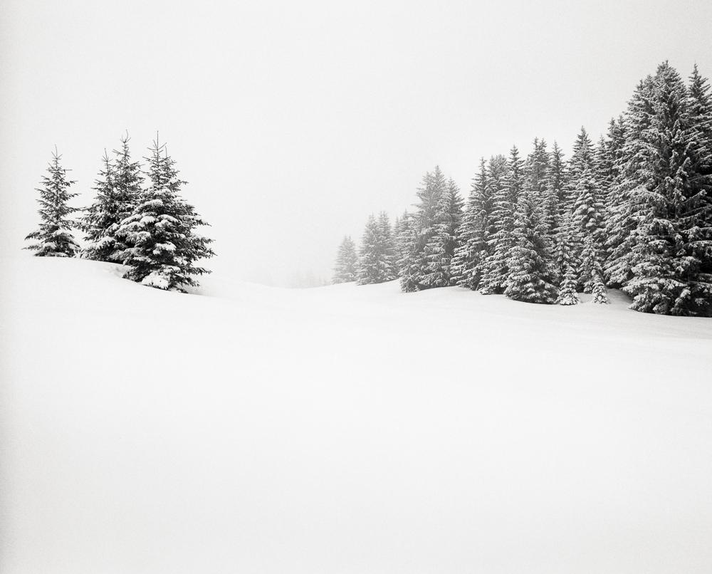 Winter Trees 2, France, 2013