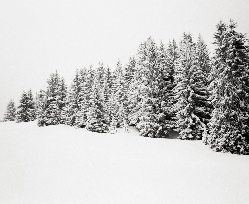 Winter Trees 3, France, 2013