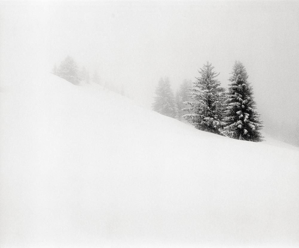 Winter Trees 1, France, 2013
