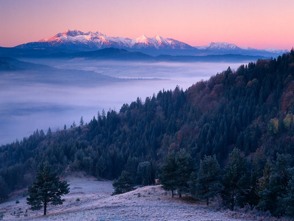 Trees, Mists and Mountains; Lesnica, Slovakia