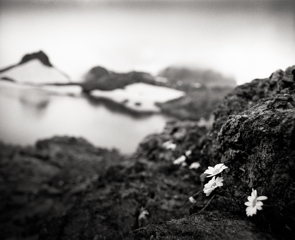 Title: Small World 3, Camera: Mamiya RB 67 Pro SD, Lens: Sekor 50 mm, Film: Ilford HP5+, Exposure: 1/60, f 16, Vallorcine, France, 2014