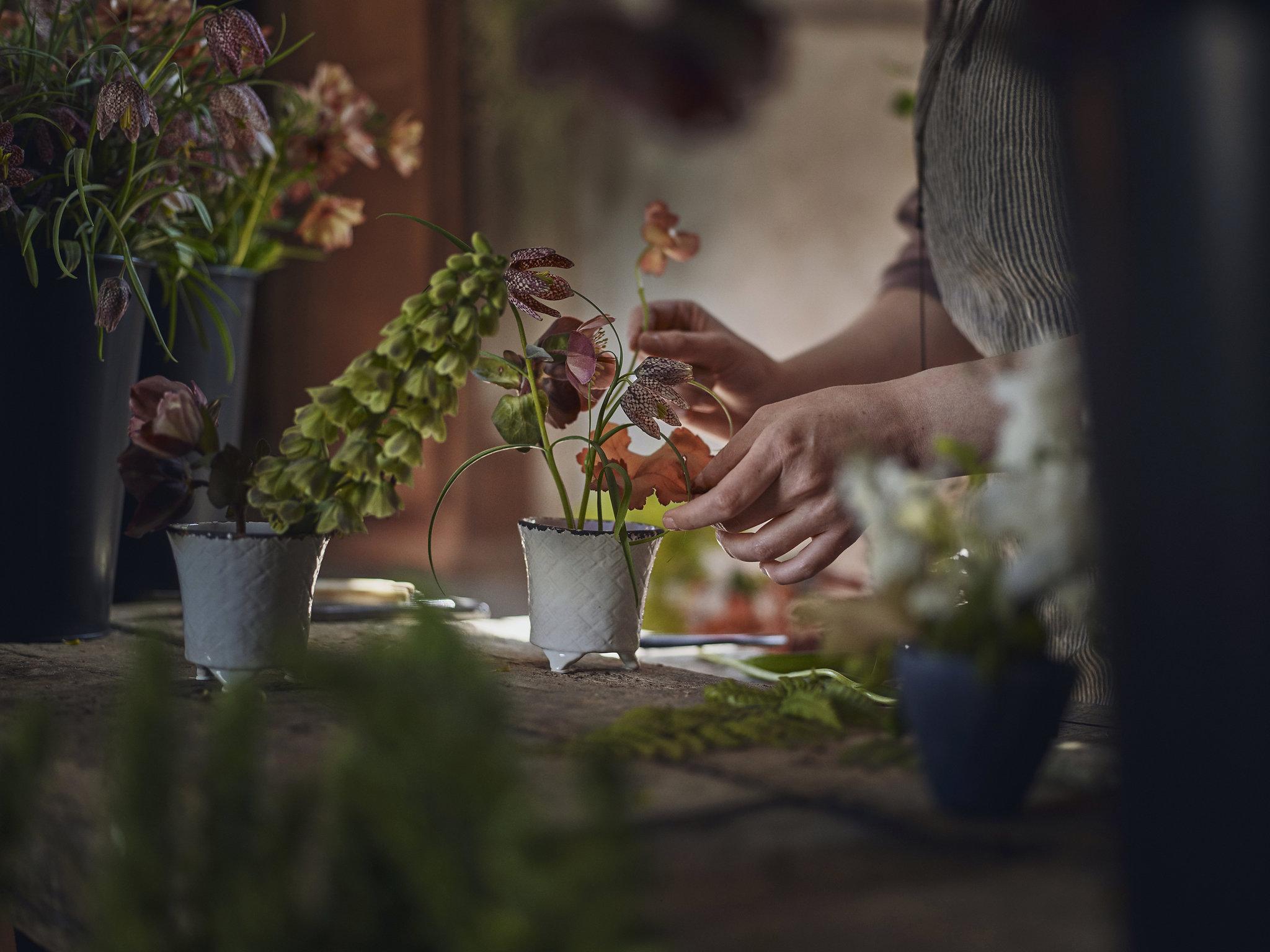 wild_flower_fairy-049.jpg