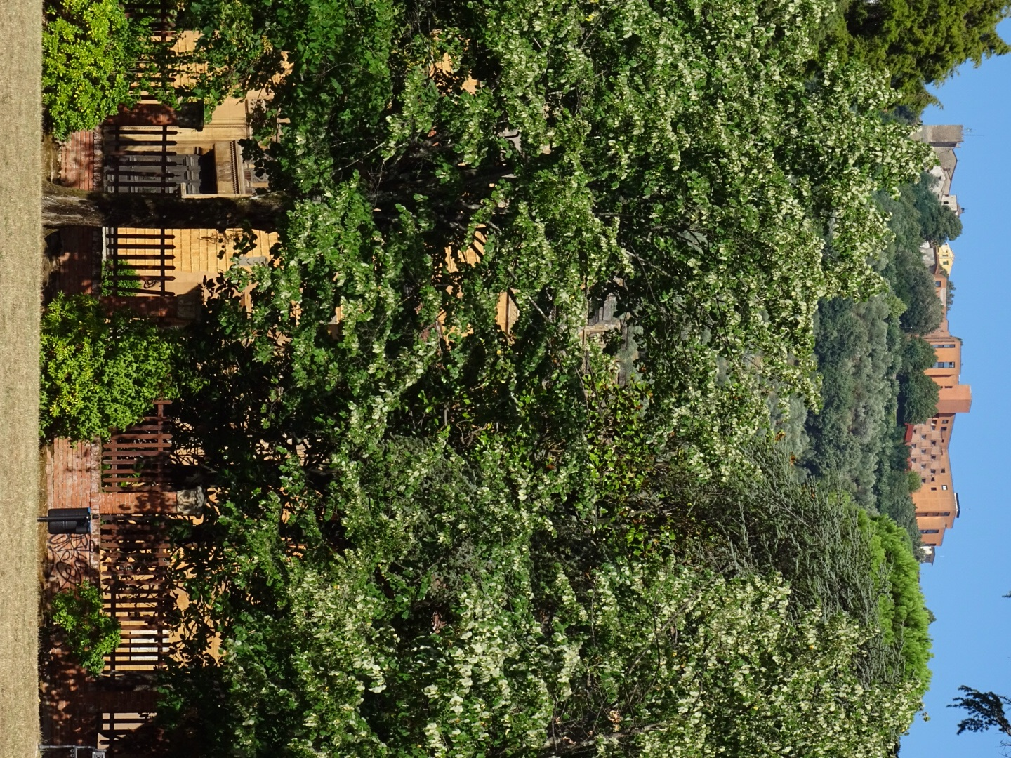 Whilst in the Park we could see Montecatini Alto above the trees. We will be visiting this evening after dinner.