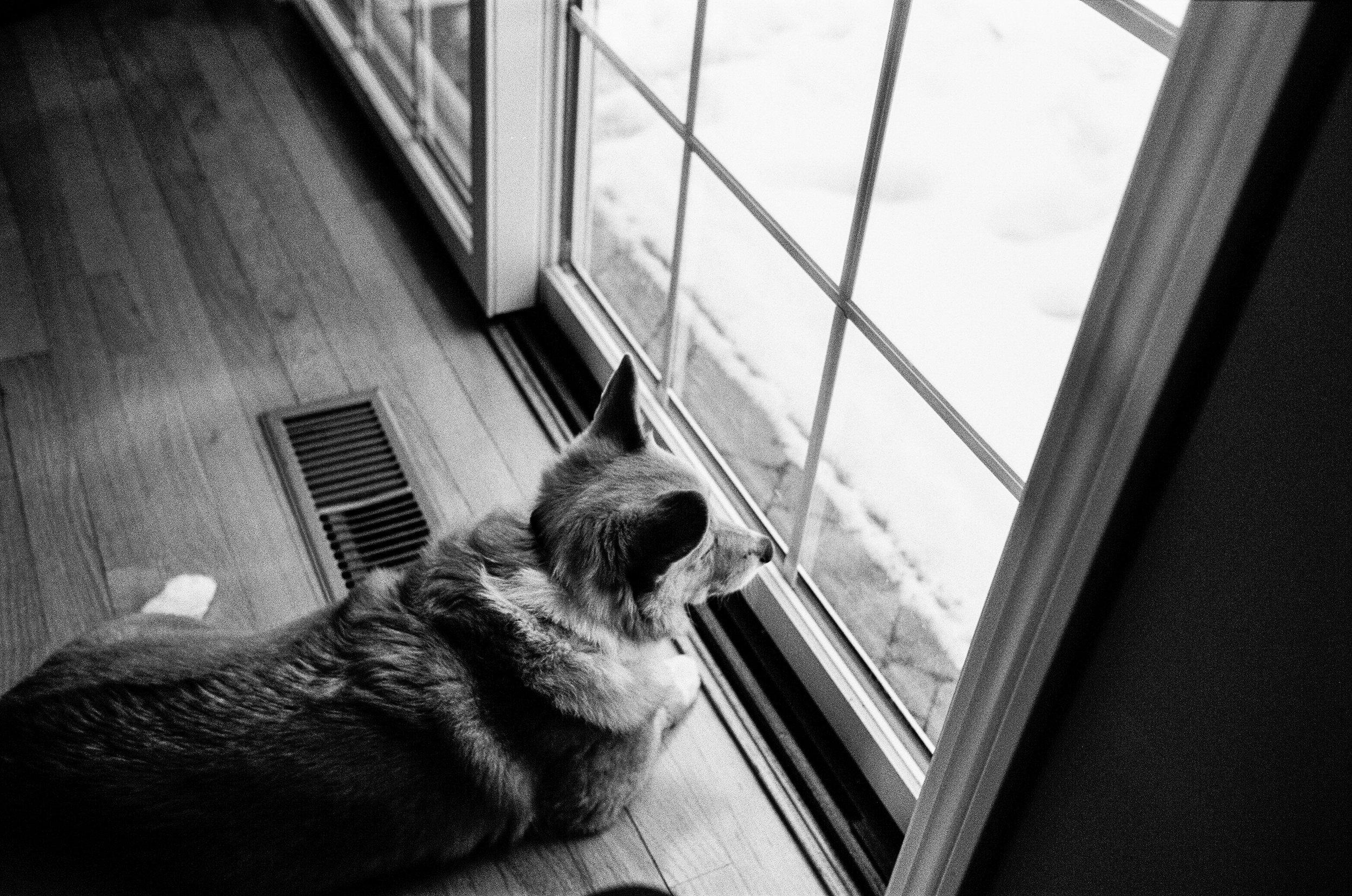 LeicaM6_TriX400-227.jpg