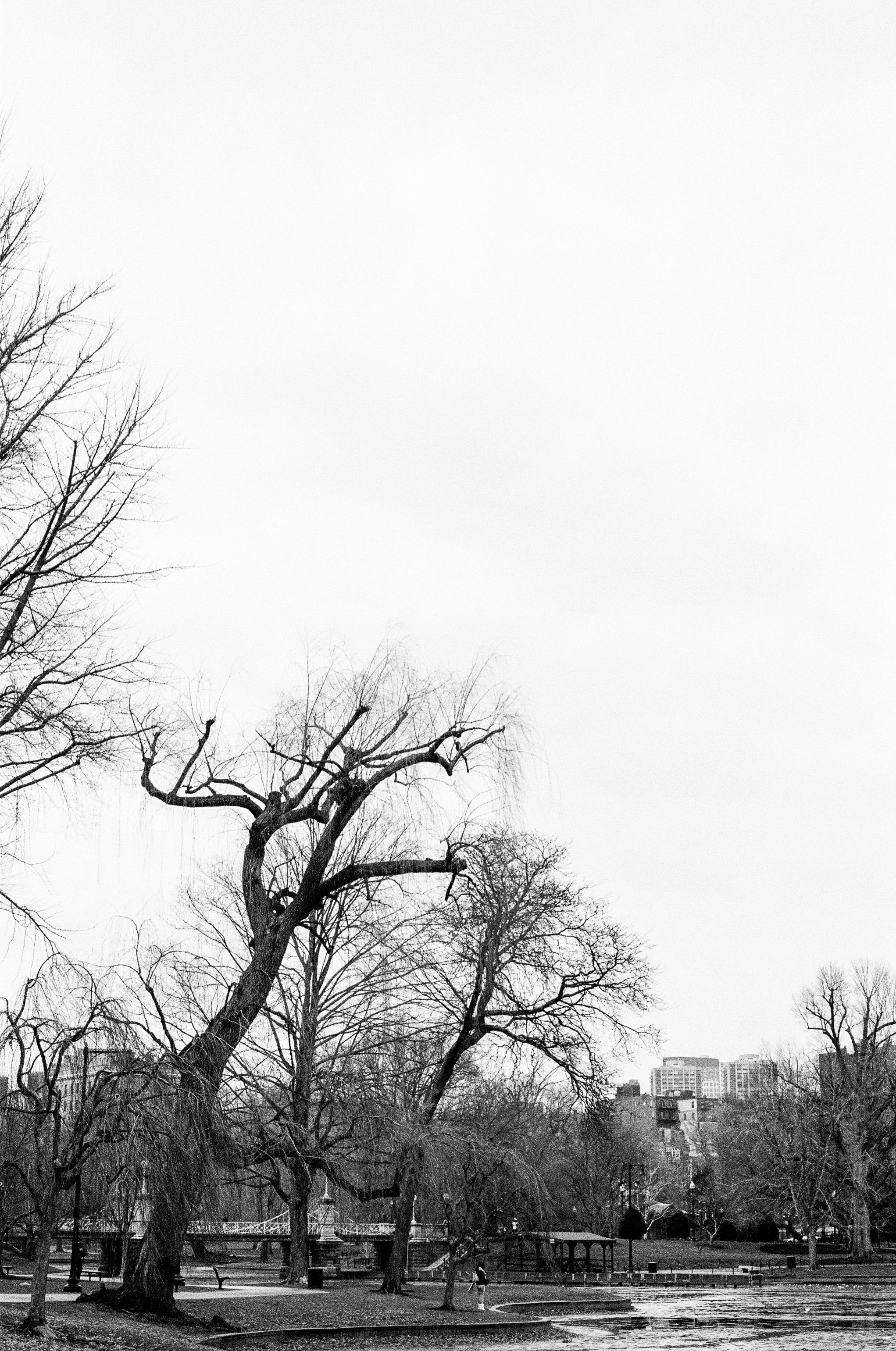 LeicaM6_TriX400-264.jpg