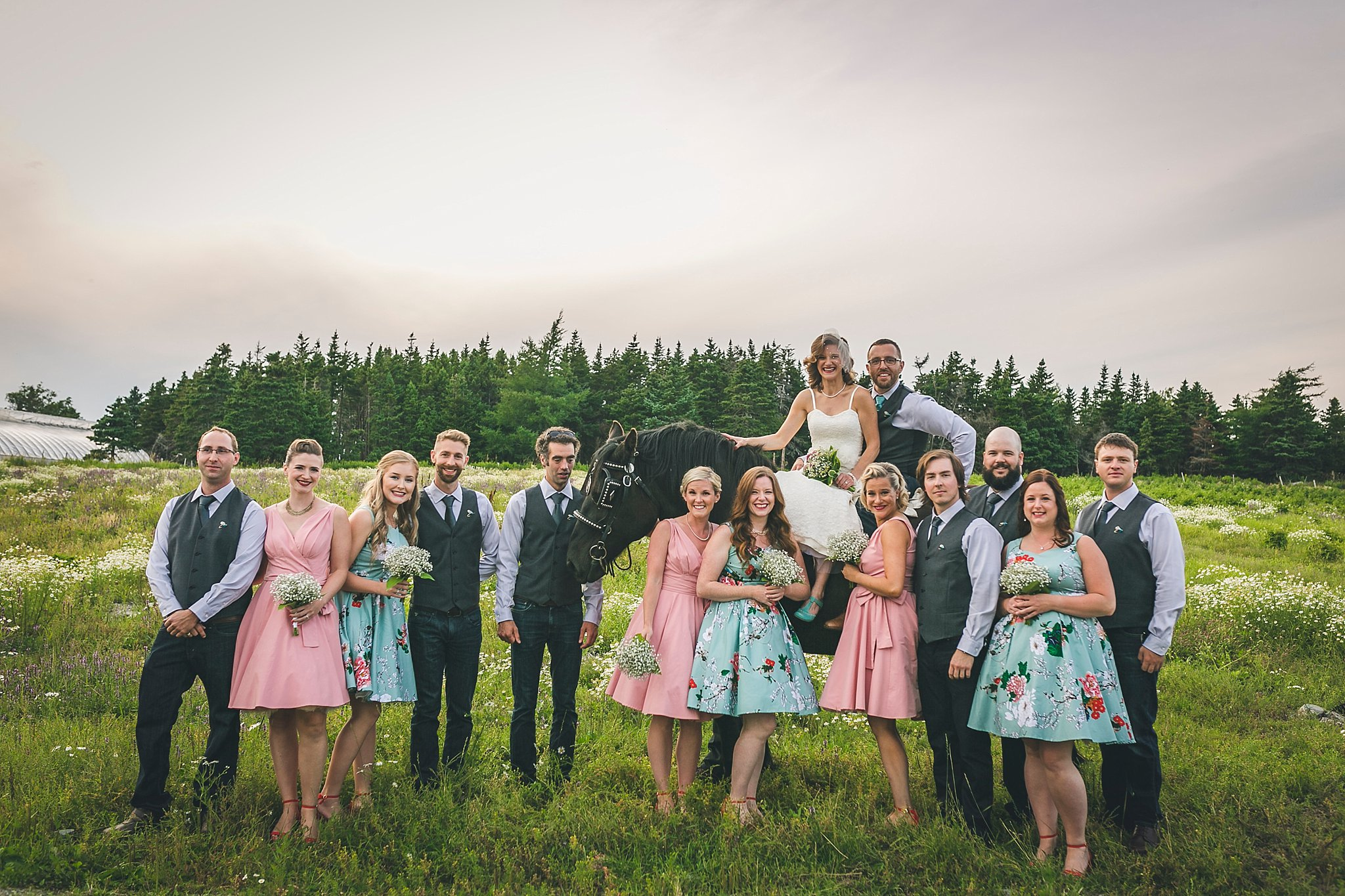 Wedding party have their photo taken with horse during a St. John's, Newfoundland Wedding held at Lester's Farm