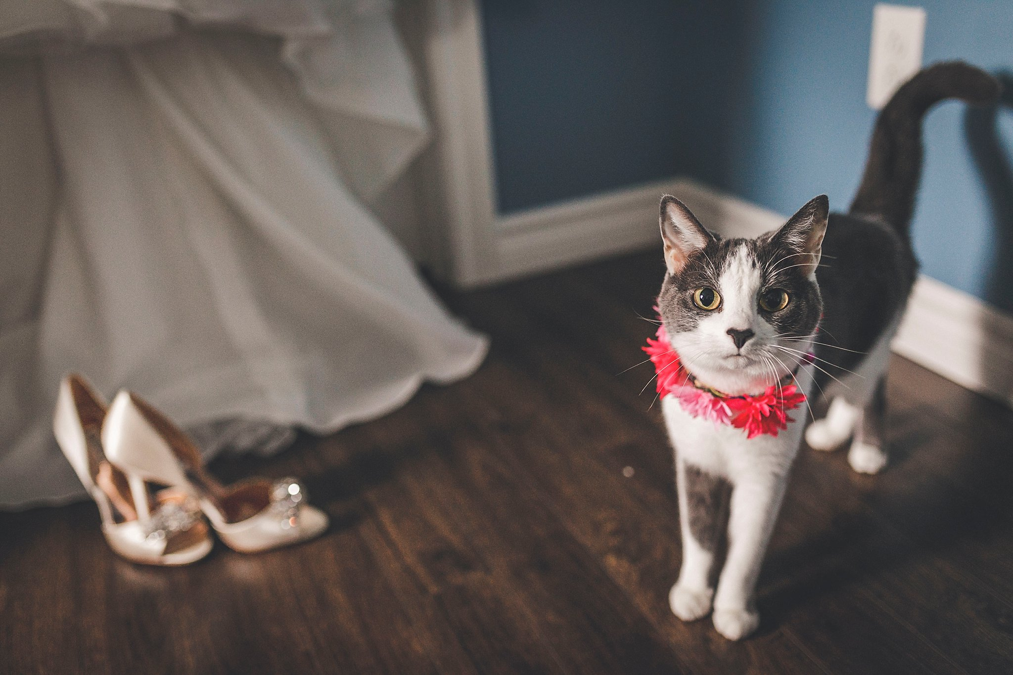 Dress, Shoes and Cat