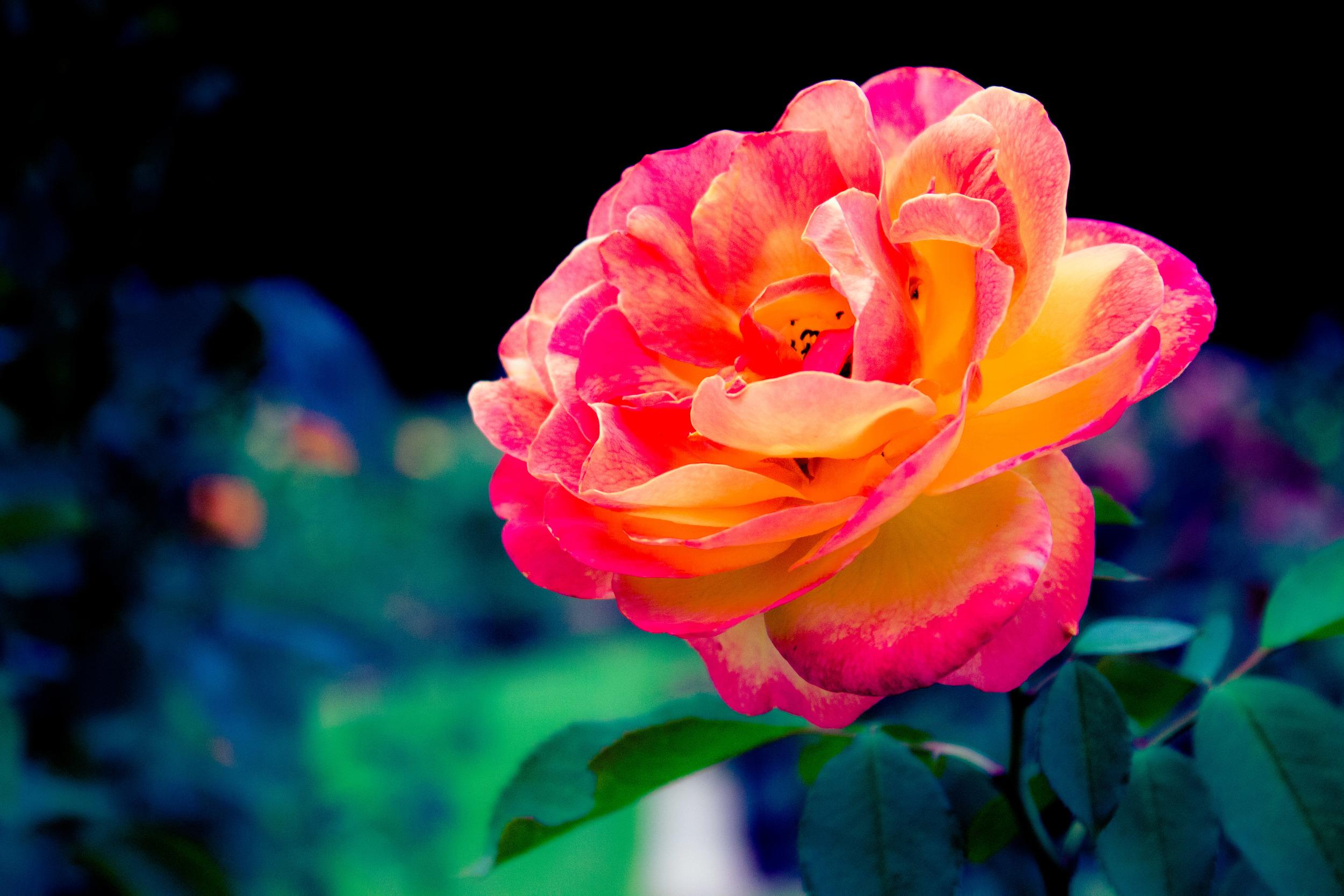 flower.bham.jpg
