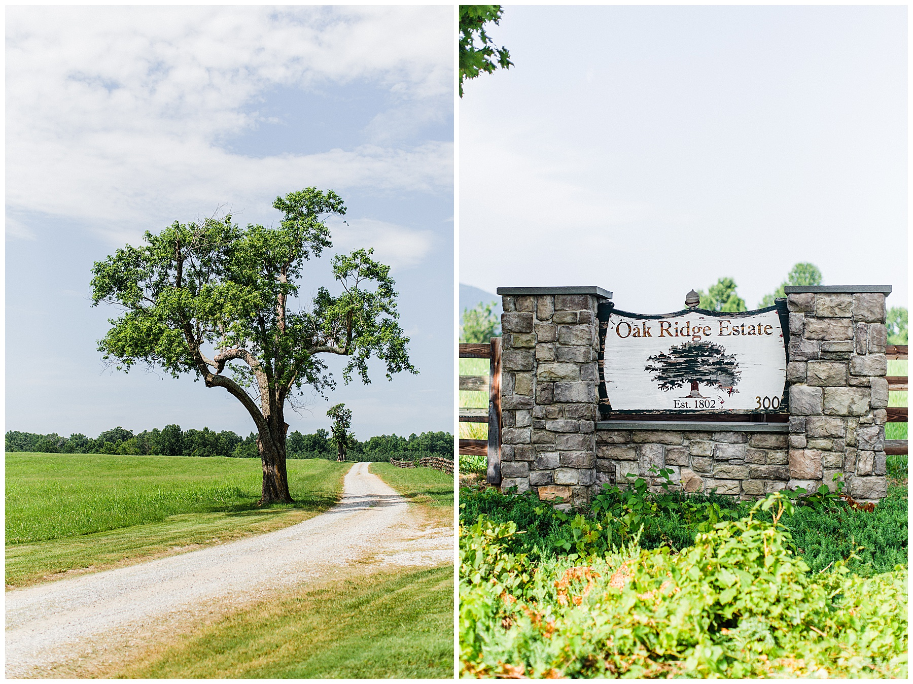 oak-ridge-estate-wedding-virginia-photographer4.jpg