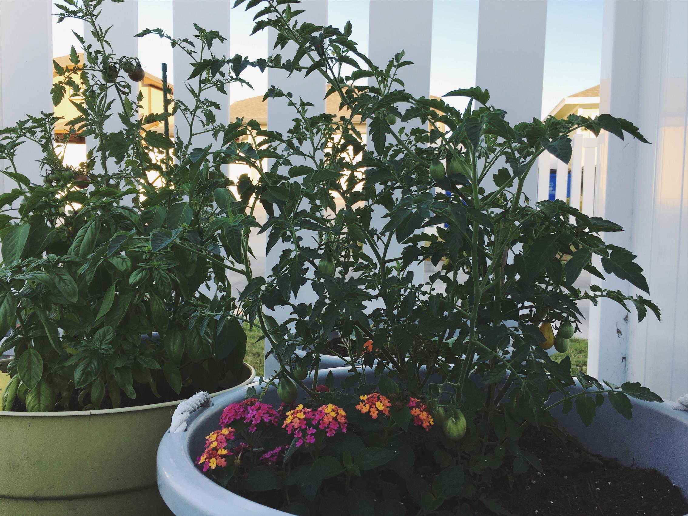The happier, healthier, non-dead plants of Season 2!