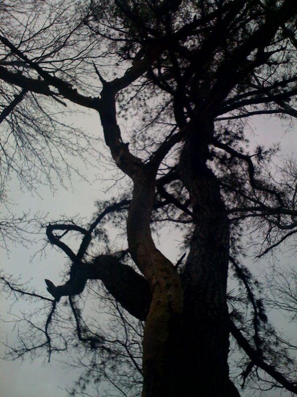 big black tree.jpg