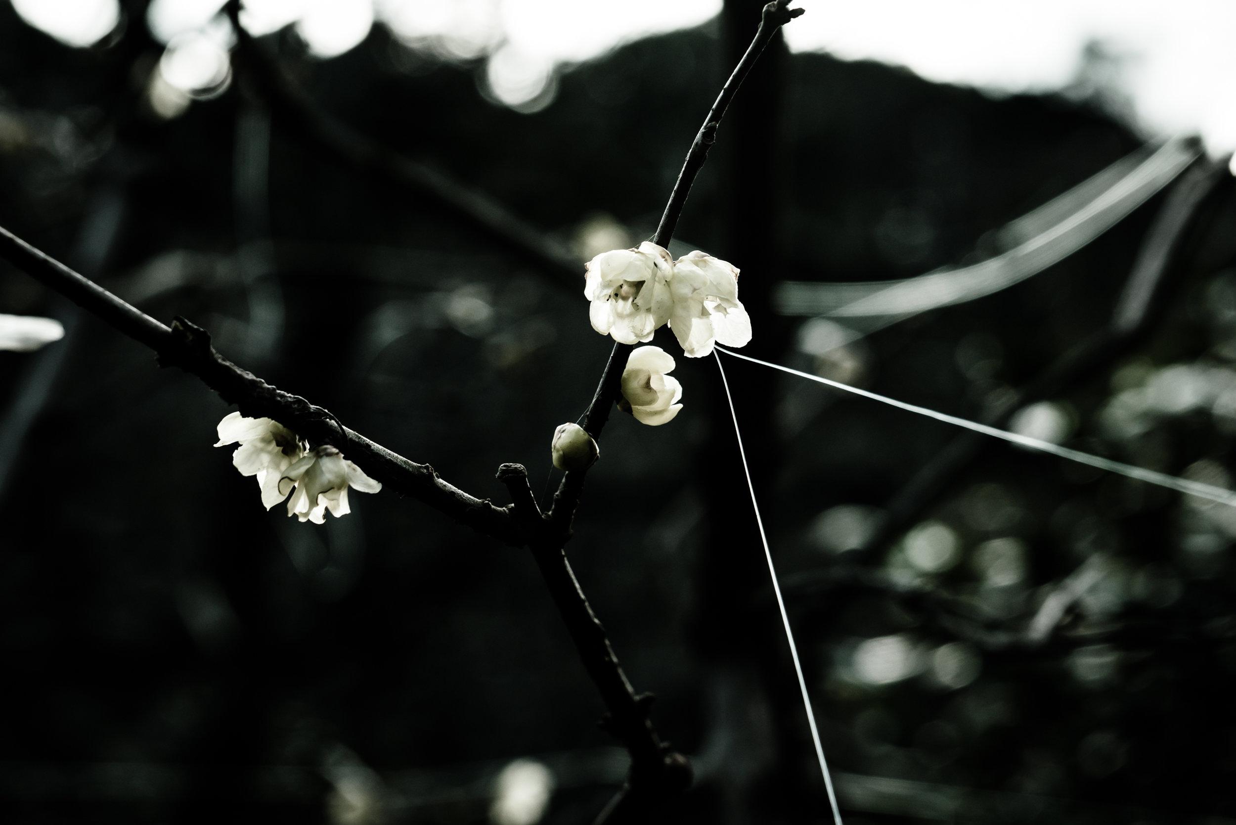 shizen-13.jpg