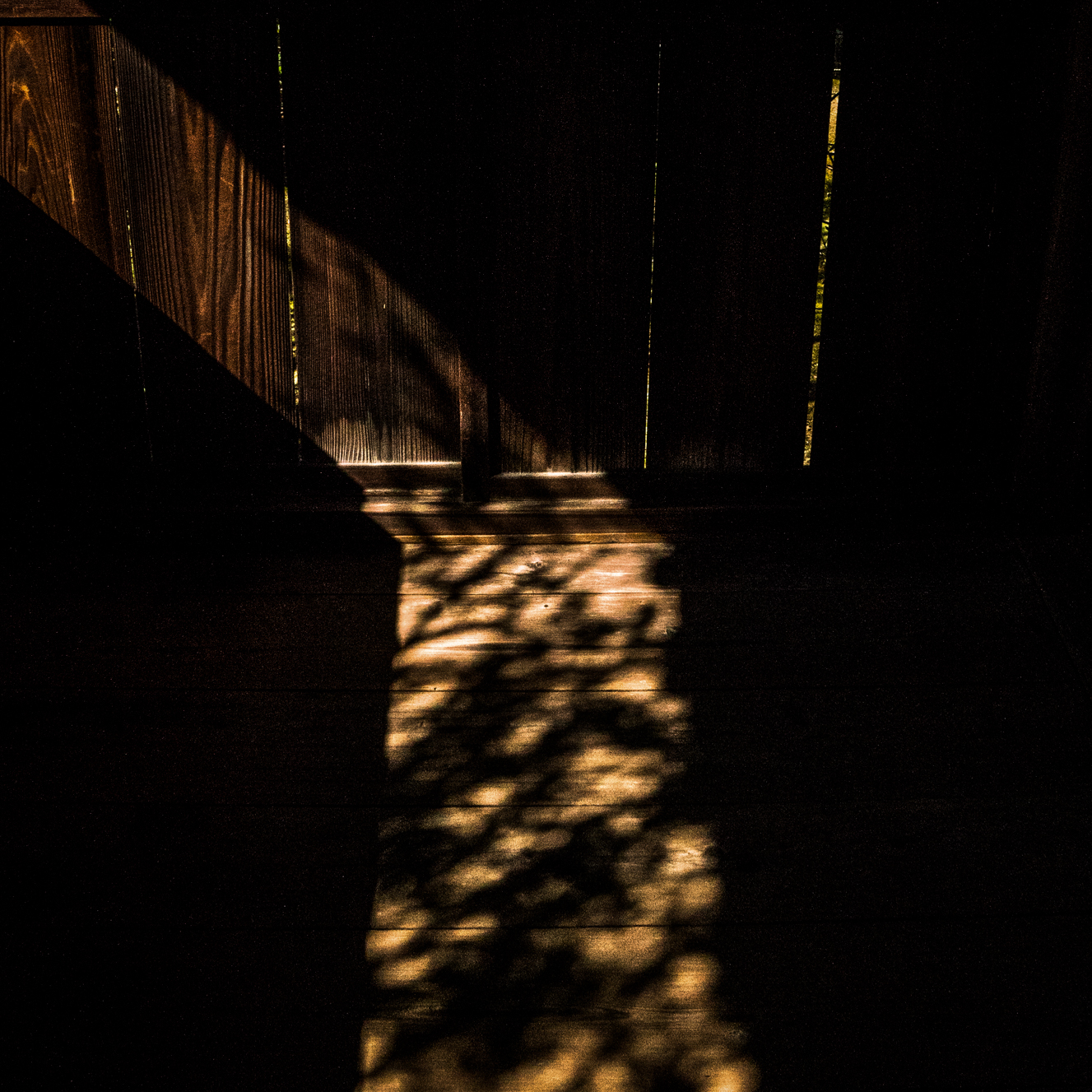 feeble light-3.jpg