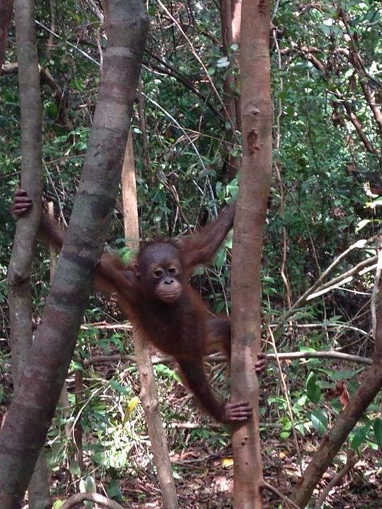 expedition monkey.jpg