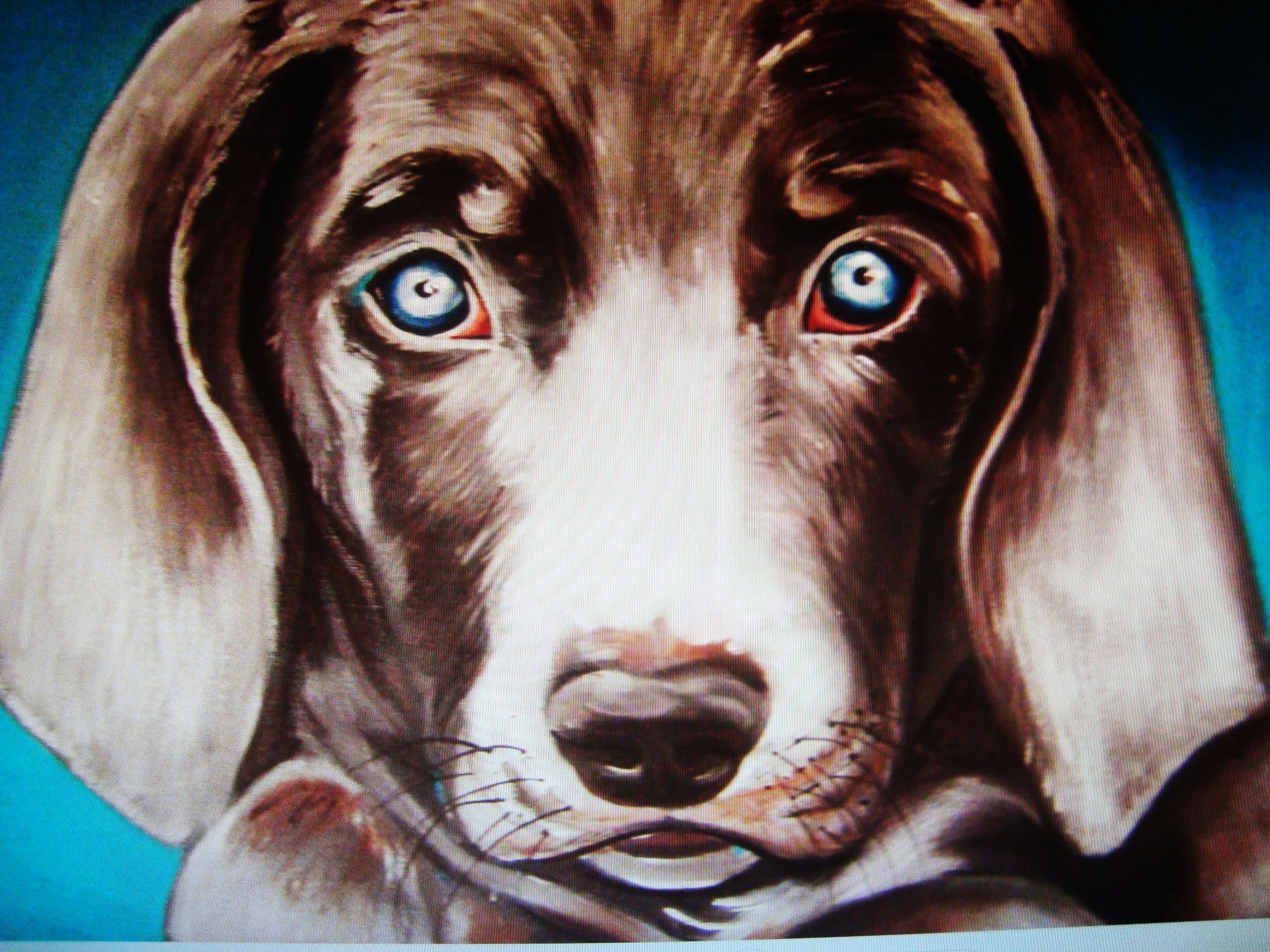 webdoggy9.jpg