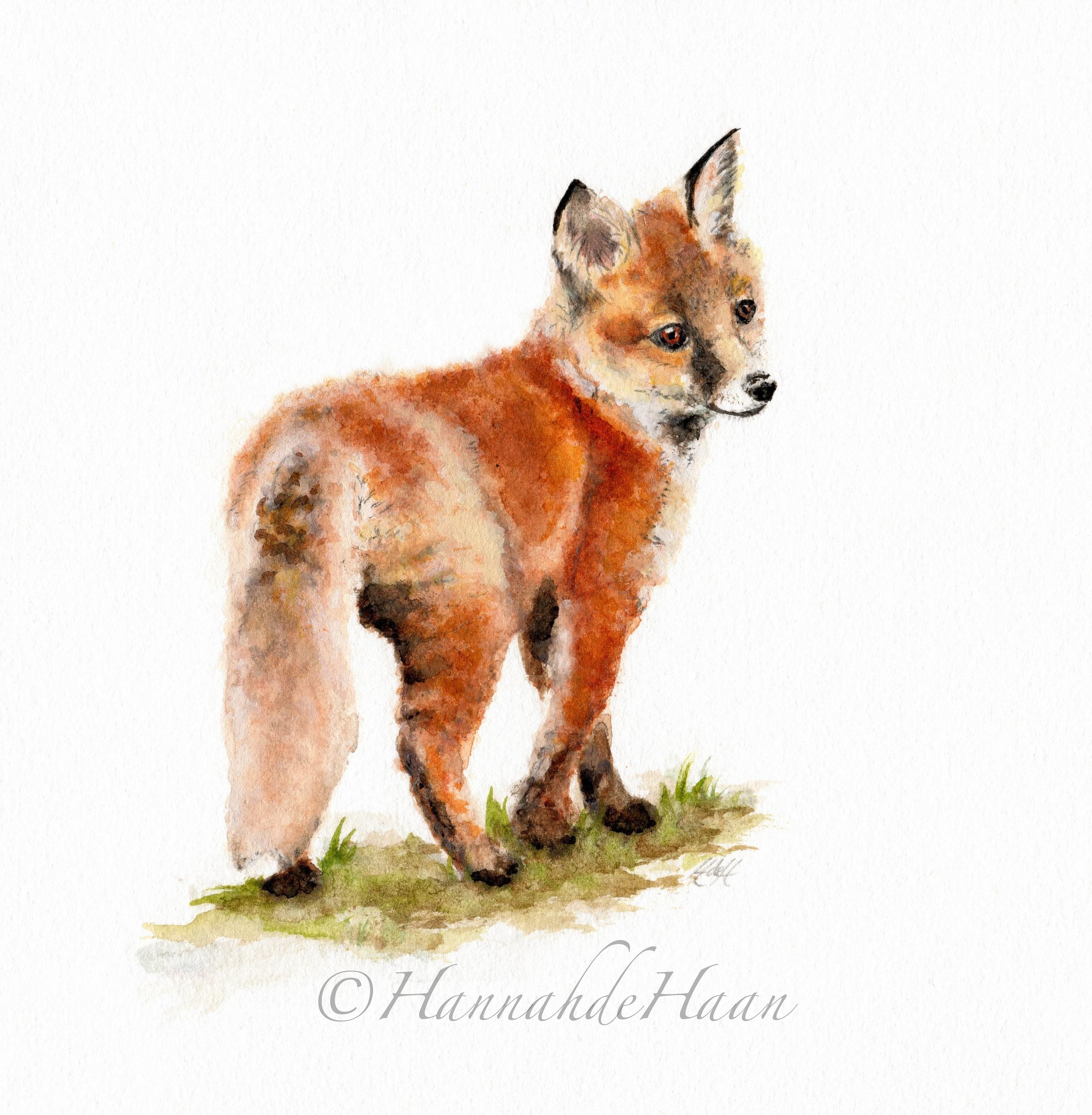 Fox Cub Edited.jpg