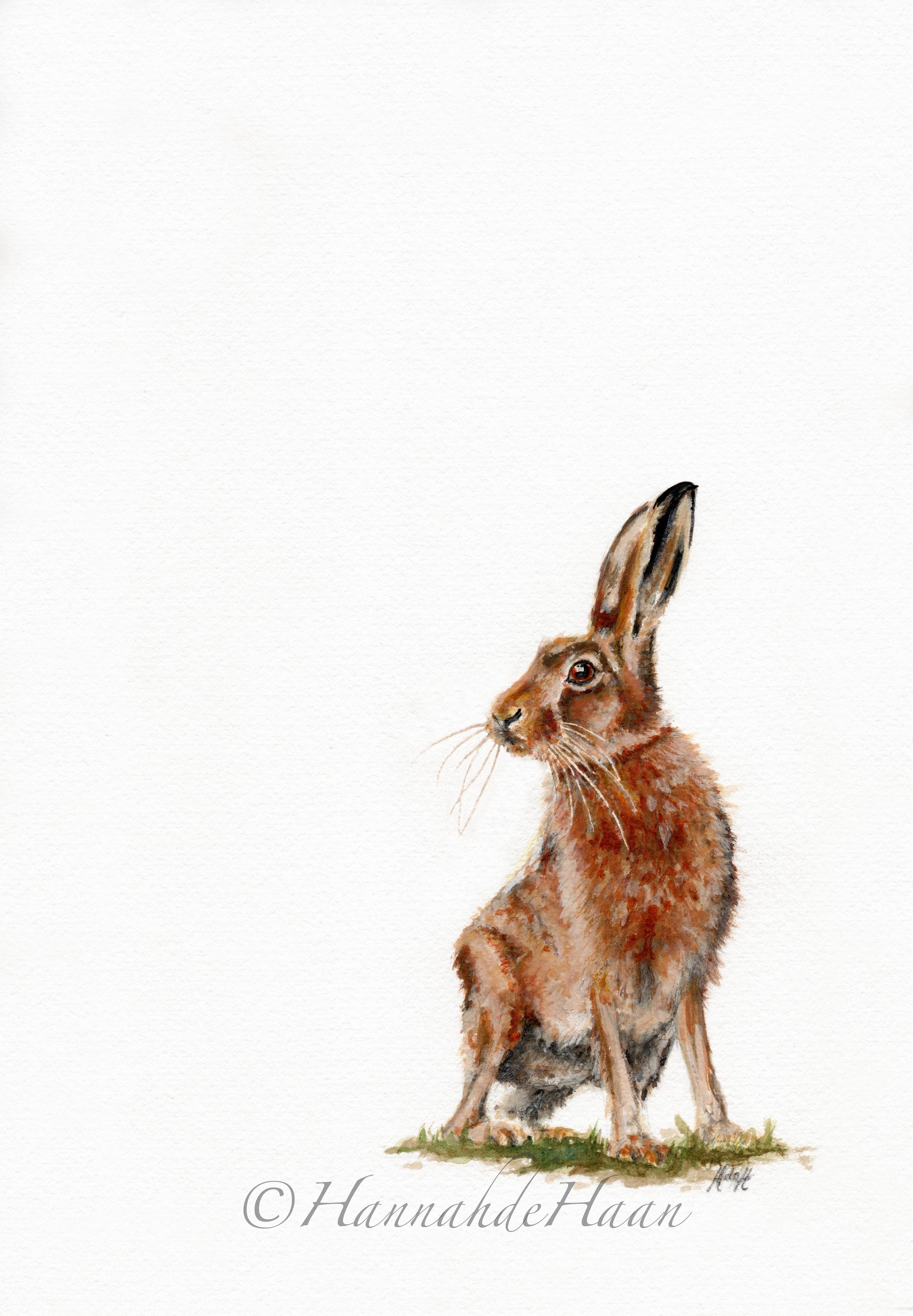 Hare Edited.jpg
