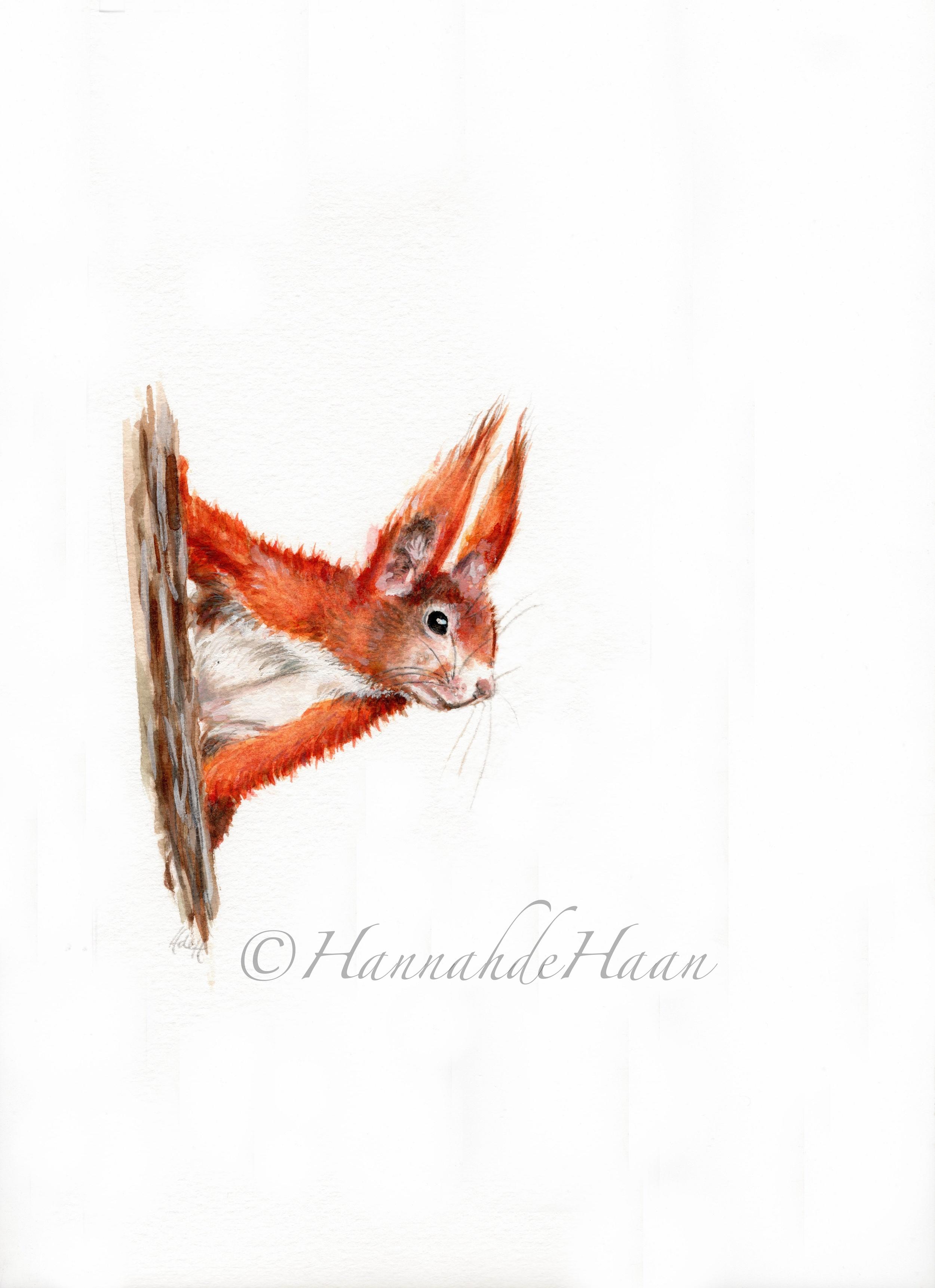 Squirrel Edited.jpg