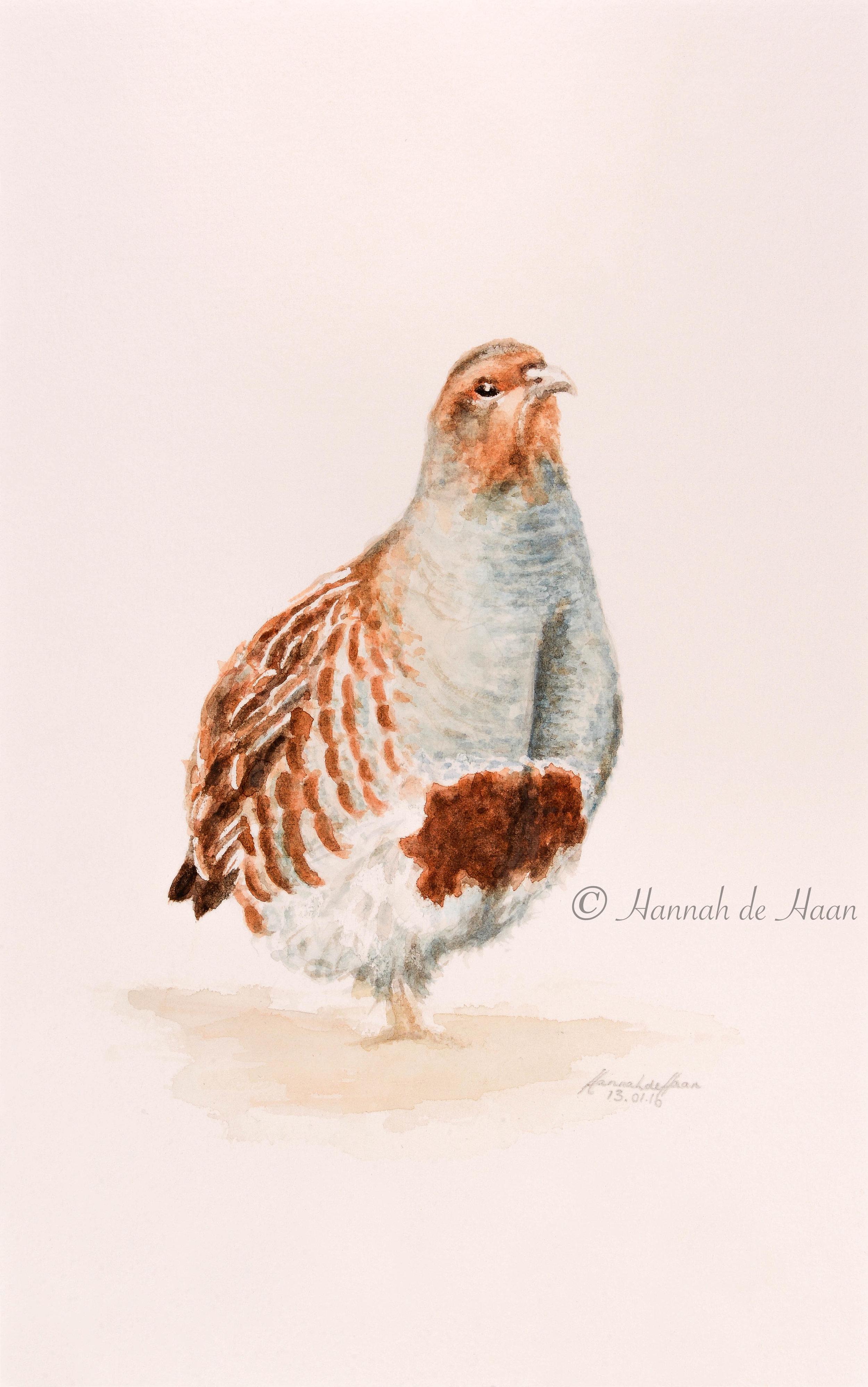 Partridge-3-2.jpg