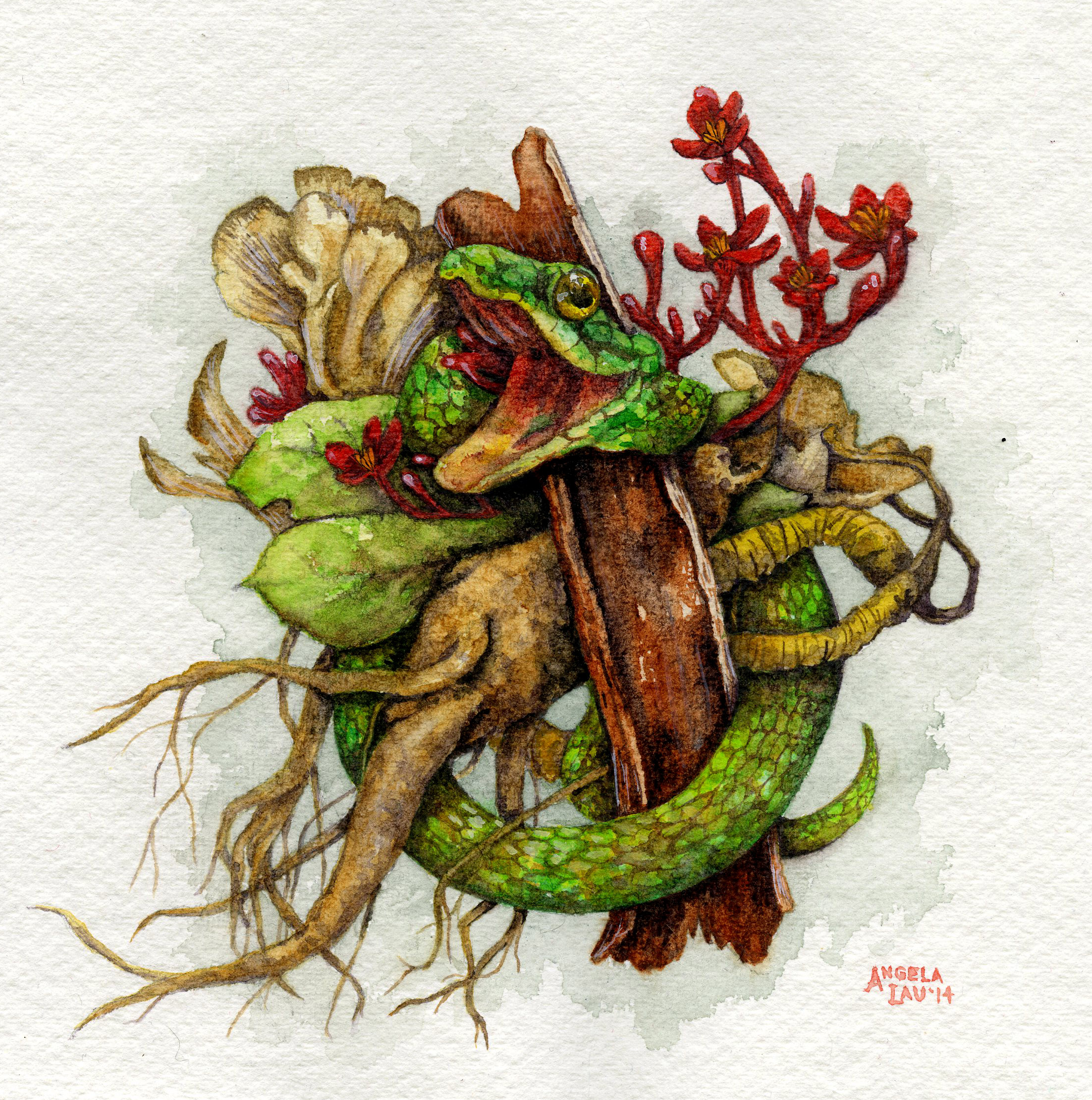 Natural  Watercolor on paper 2014  Natural medicines throughout Asia