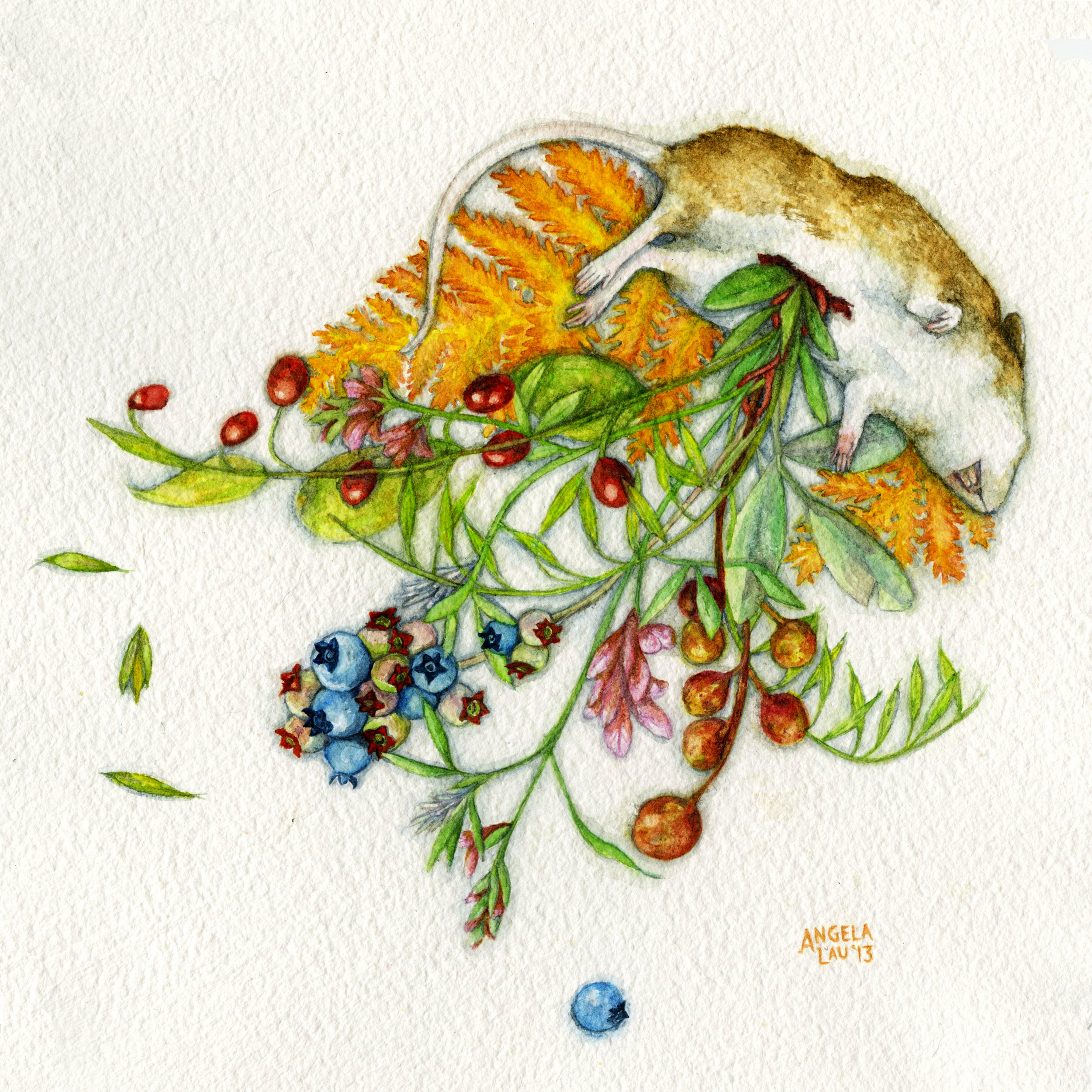 Field Mouse  Watercolor on paper 2013  Diet of field mice.