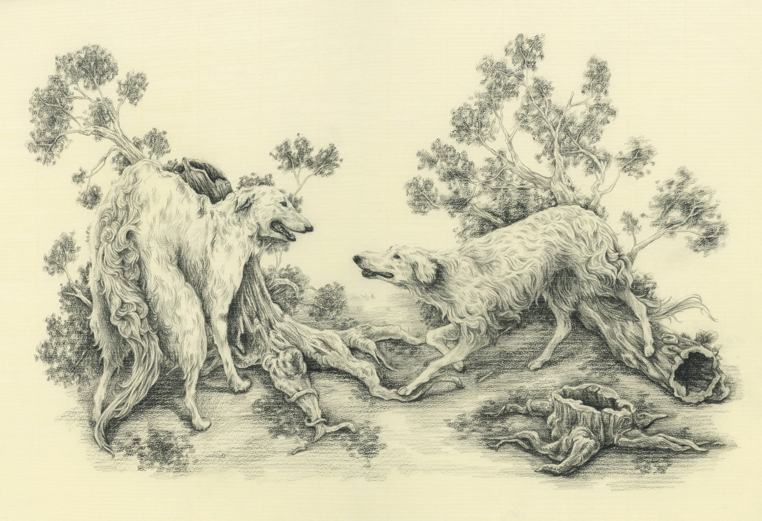 Borzoi  Oil based graphite on Italian laid paper 2015  A meeting of two beings in the woods