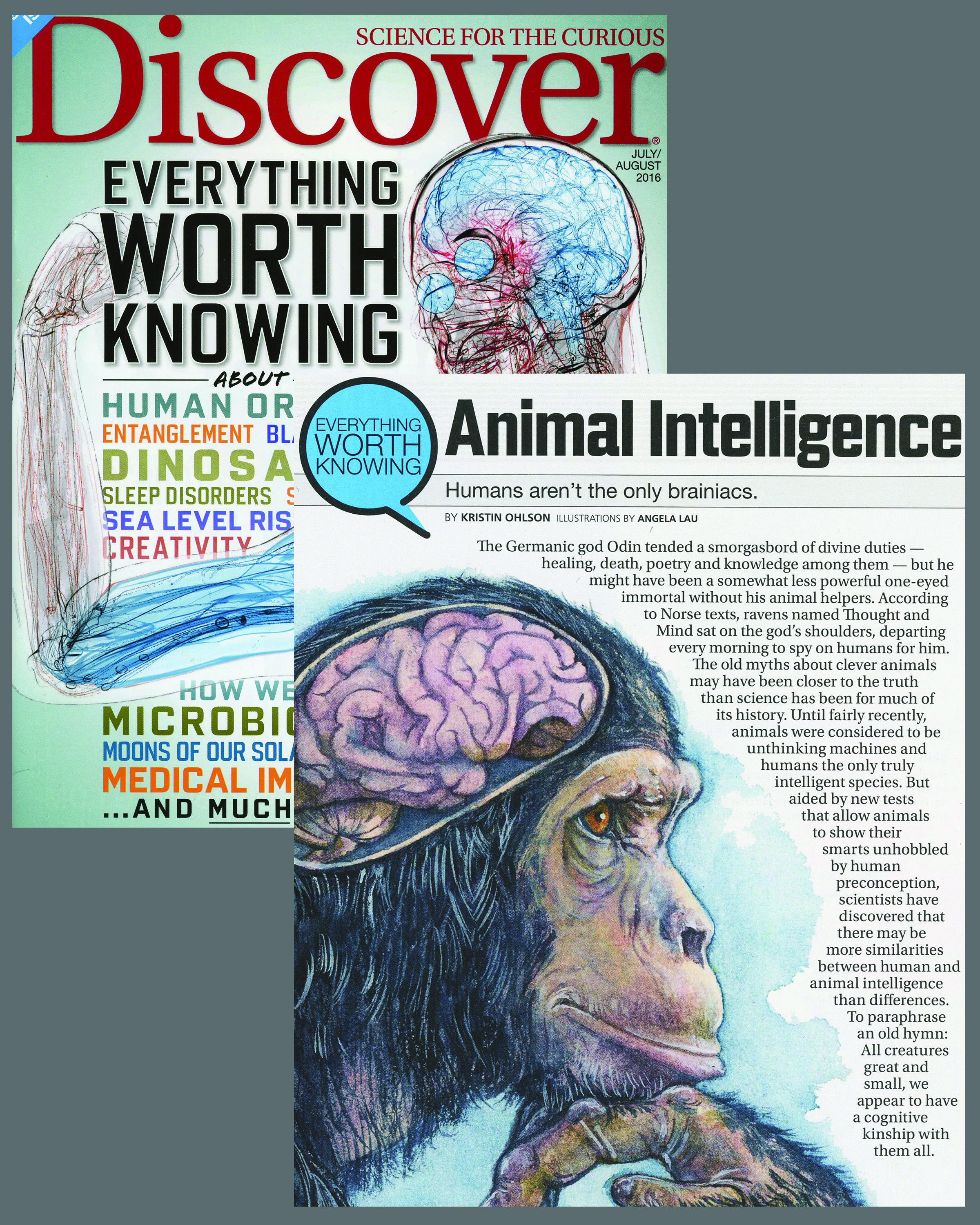 "Everything Worth Knowing About ... Animal Intelligence - "" Humans aren't the only brainiacs.""  By  Kristin Ohlson   Published in  Discover Magazine  for July/August 2016 issue, page 66-69.  Online Article  here   AD Alison Mackey  Article on different types of intelligence in animals"