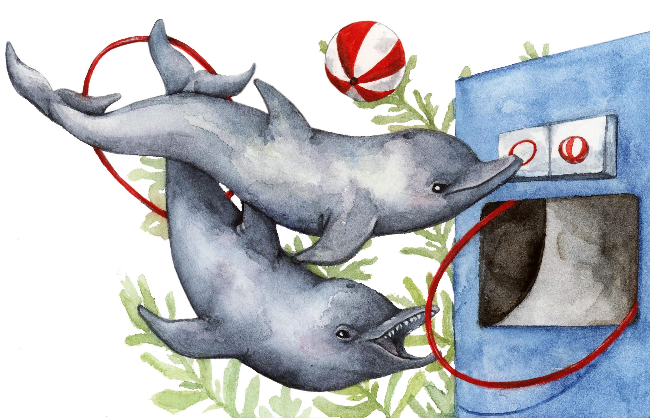Dolphin-speak