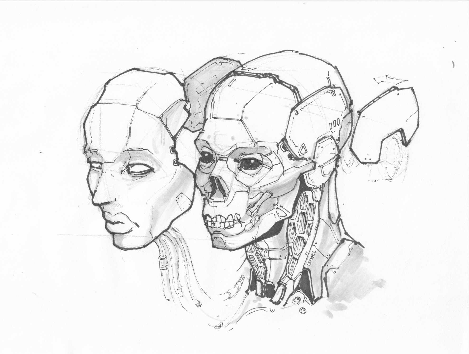 IS_Female_skull.jpg