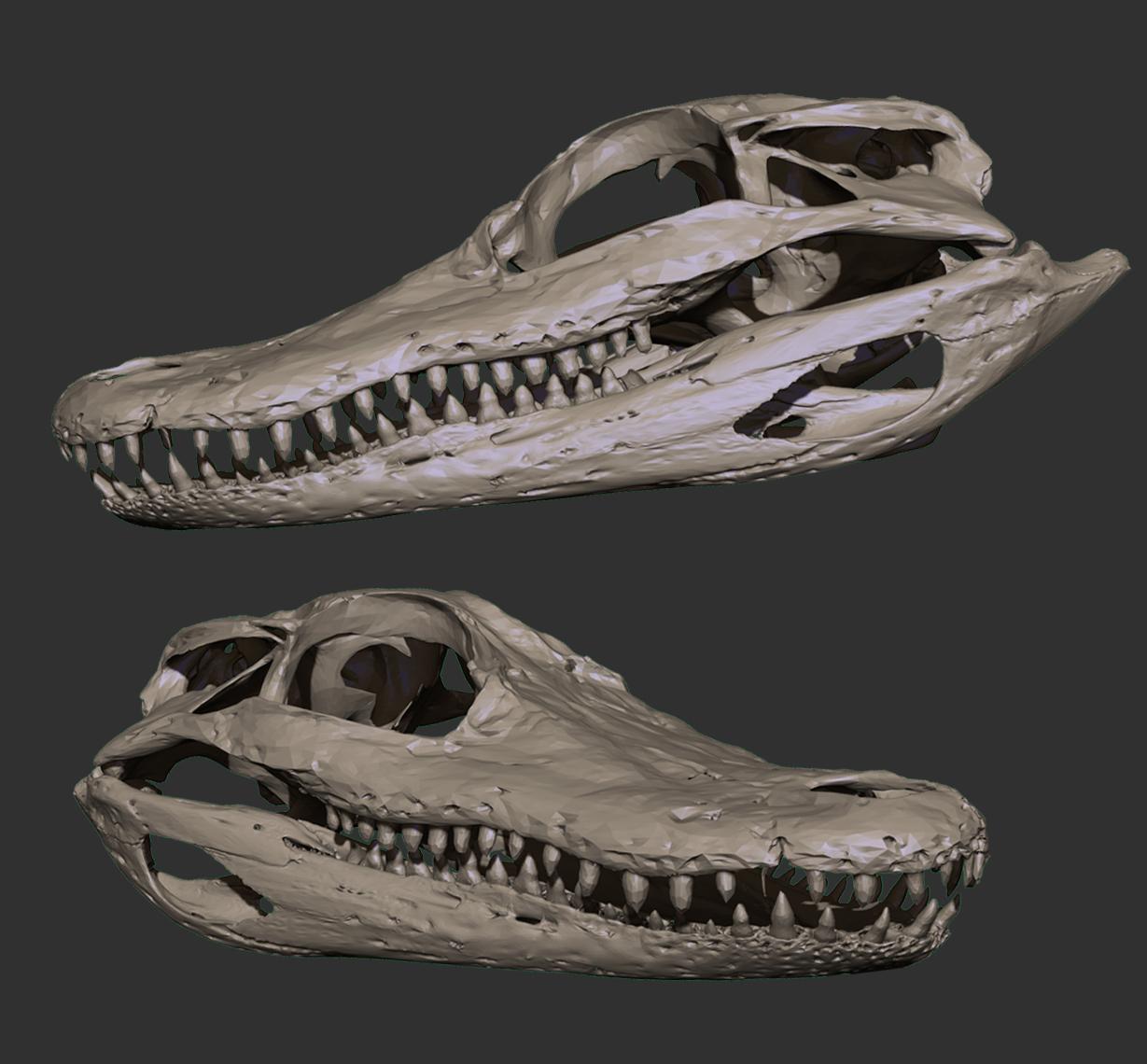 Alligator_.jpg