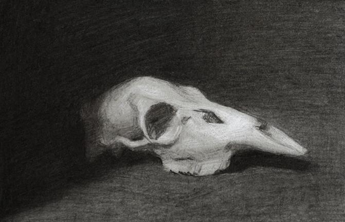 skull value study small.jpg