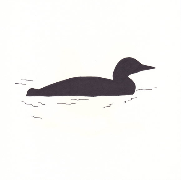 Minnesota - Common Loon