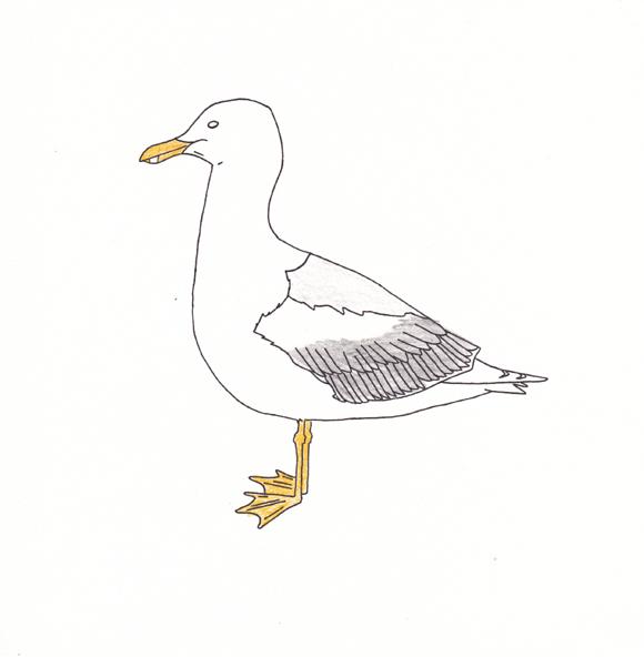 Utah - Sea Gull