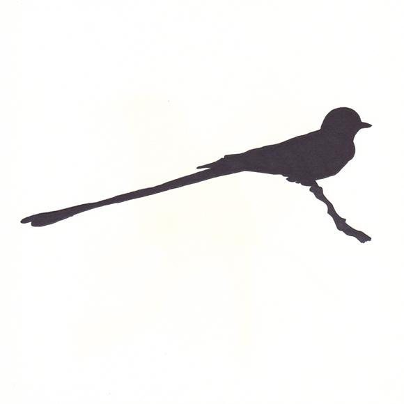 Oklahoma - Scissor-tailed Flycatcher