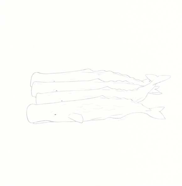 Connecticut - Sperm Whale - Four
