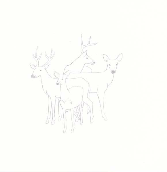 Pennsylvania - White-tailed Deer - Four