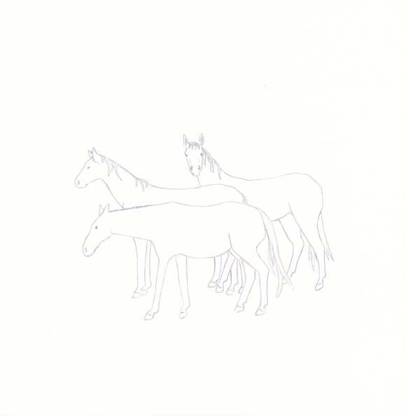 New Jersey - Wild Horse - Three