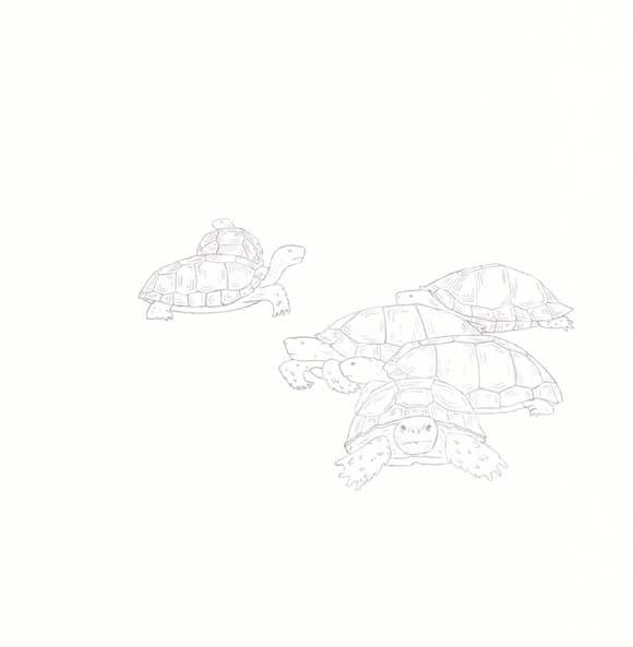 Georgia - Gopher Tortoise - Six