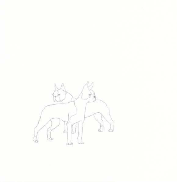 Massachusetts - Boston Terrier - Two