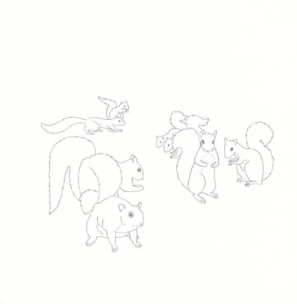 North Carolina - Grey Squirrel - Eight