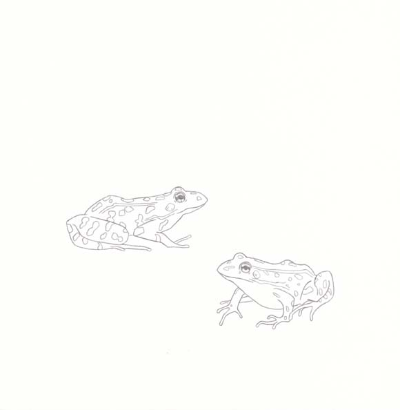 Vermont - Northern Leopard Frog - Two