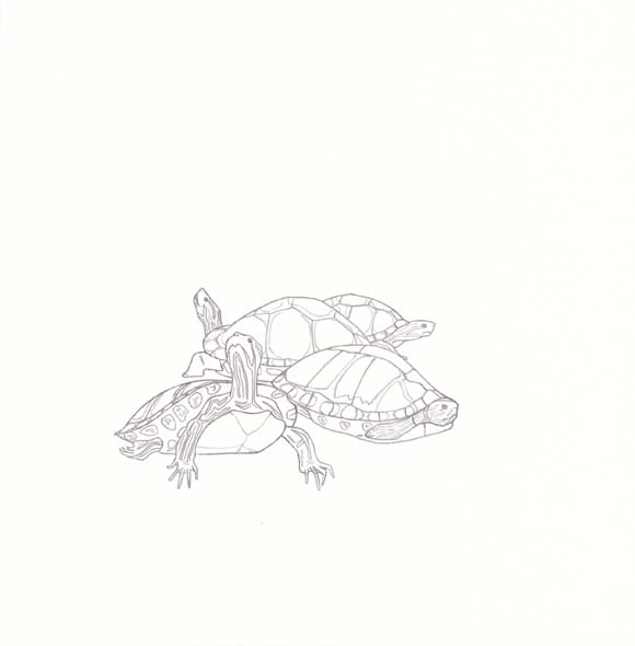 Alabama - Red-bellied Turtle - Four