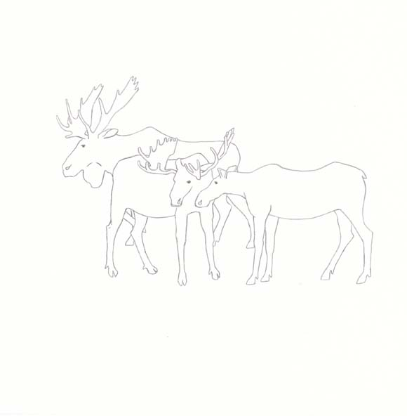 Maine - Moose - Three